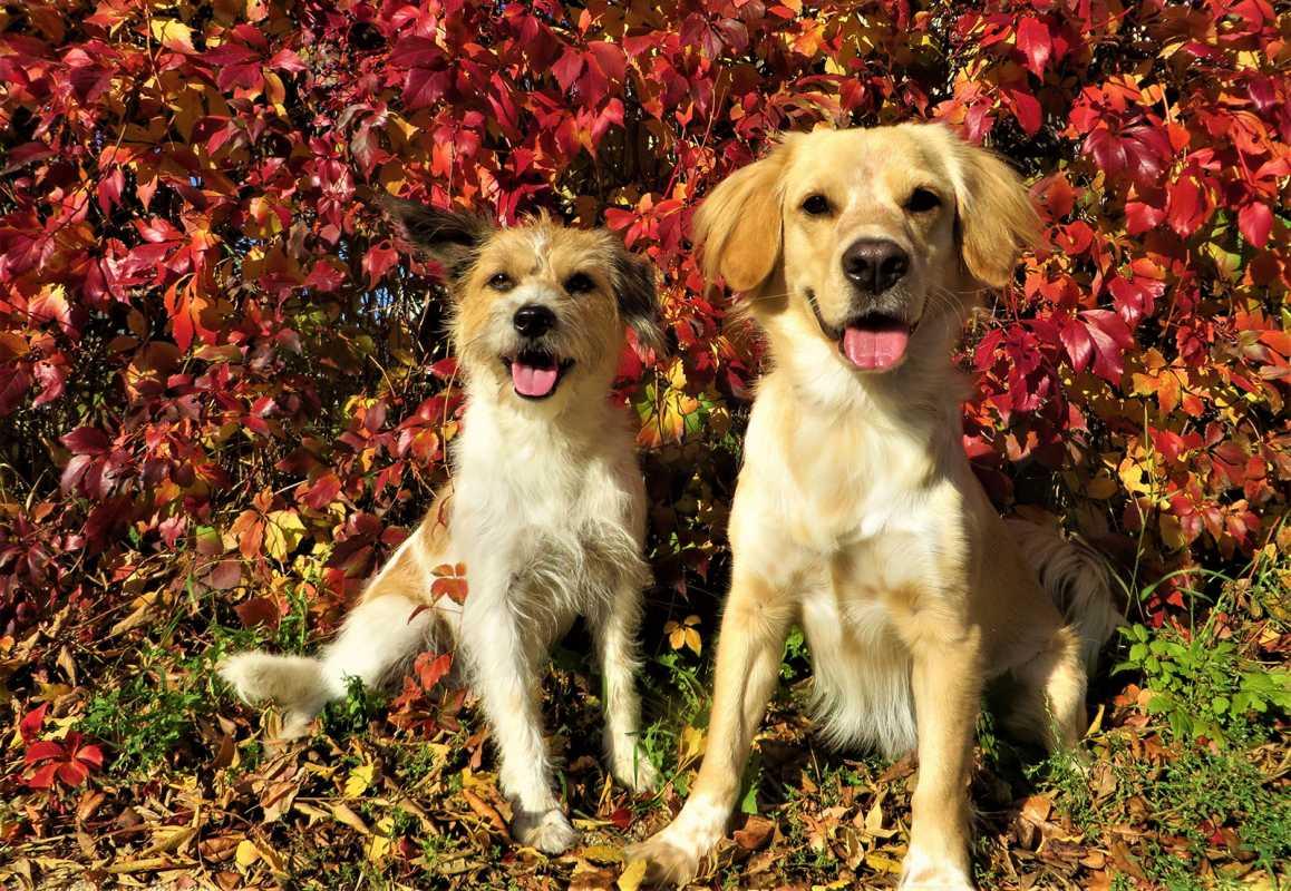 Dogsharing Sparky Sunny