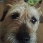 Profilbild Keniya