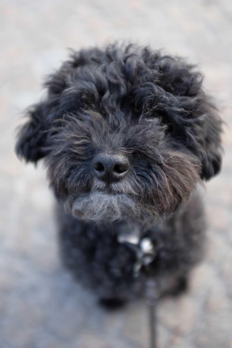 dogsharing zuerich coco hund ausleihen hundelieb. Black Bedroom Furniture Sets. Home Design Ideas