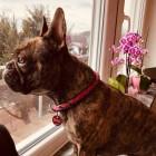 Profilbild Lola