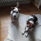 Chet & Lucy