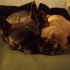 Daizi & Igor