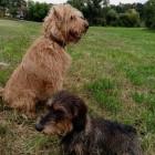 Arlet und Benda
