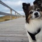 Profilbild Chico
