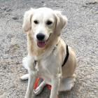Profilbild Bailey
